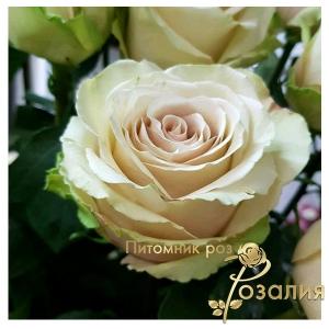 роза Pompeii (Помпей)