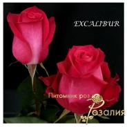 Excalibur (Экскалибур)